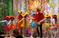 Трубадур и его друзья на сцене Дома культуры