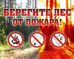 Памятка пожарной безопасности при нахождении в лесных массивах